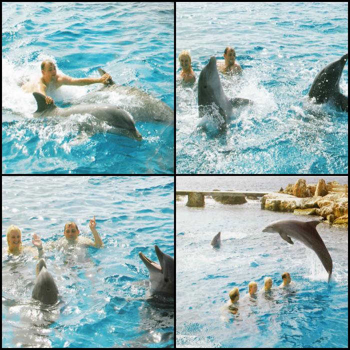 Dolphin swim Curacao
